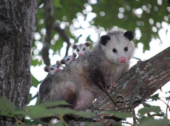 Google Opossom : Quel impact sur votre site ?